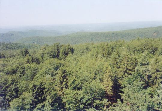Elzaser bomen