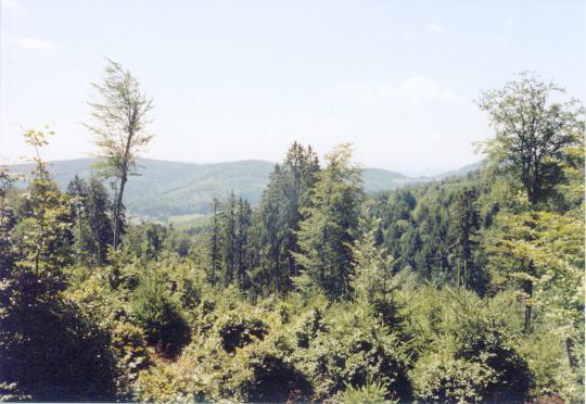 Elzas bomen